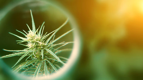 Positive Effects Of Medical Marijuana Regarding Worker's Compensation Claims.